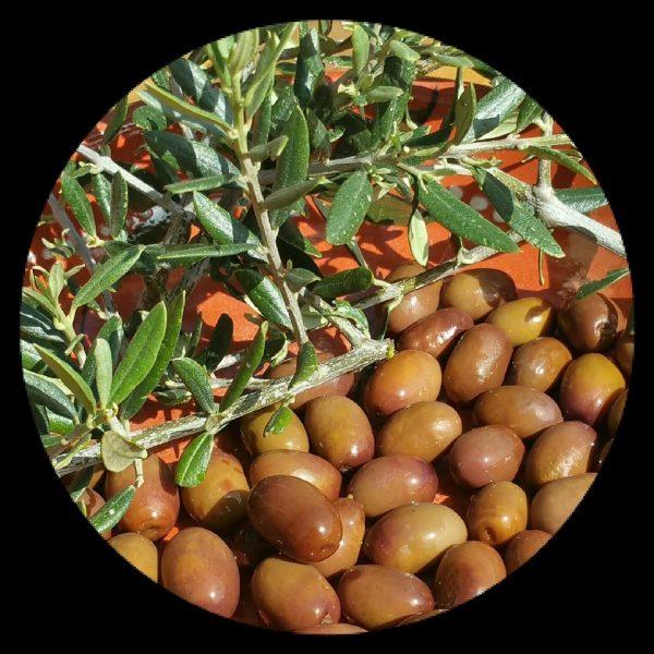 azeitonas biológicas de Mirandela